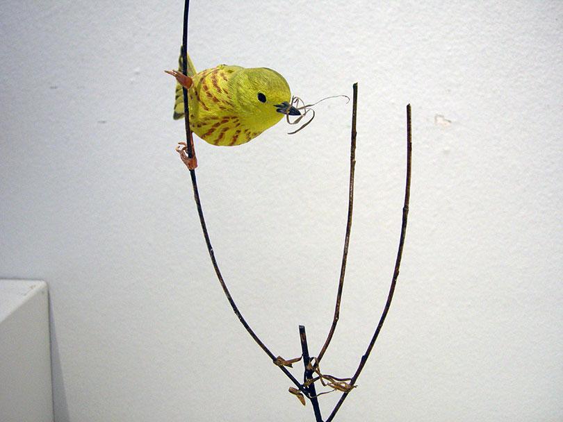 Yellow Warbler 2018